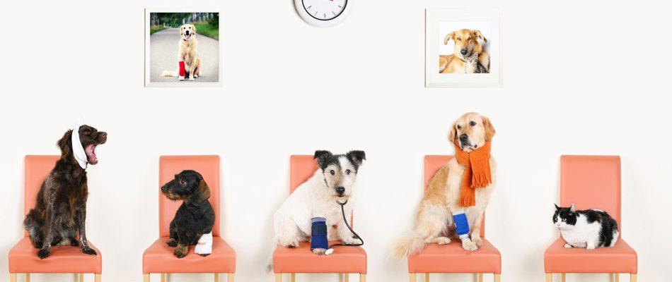 Tierarzt_Braunschweig_Headergrafik